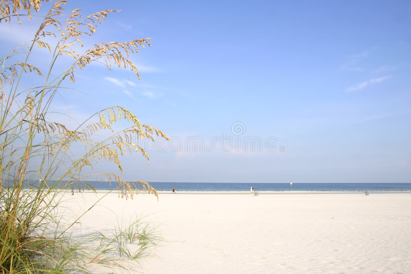 Sea Oats royalty free stock image