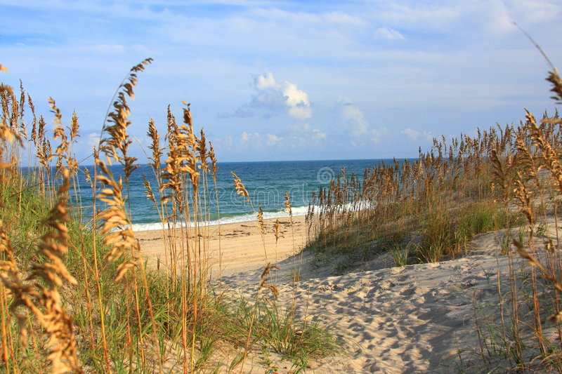 Sea Oats and Beach royalty free stock photo