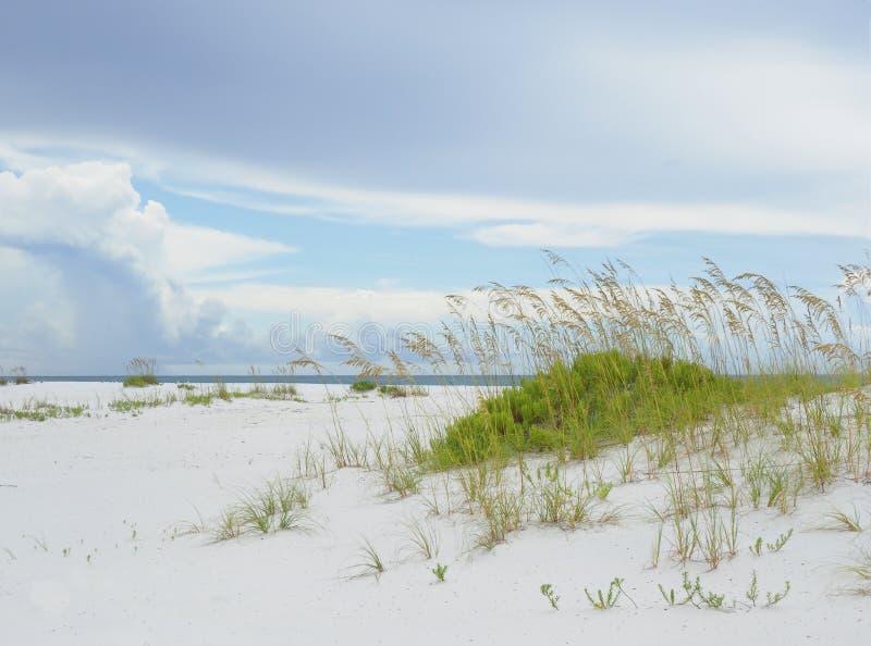 Sea Oats on the Beautiful Gulf Coast of Florida stock photos
