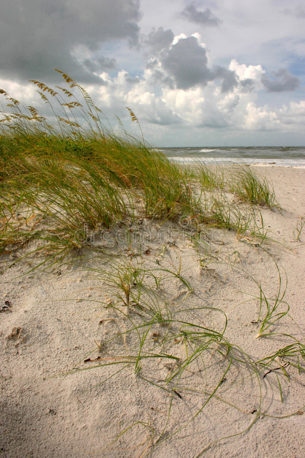 Sea Oats and clouds stock photo
