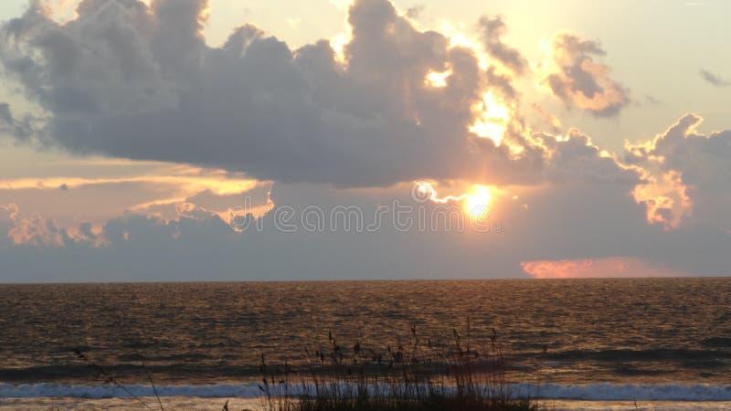 Sea Oats #7 royalty free stock photos