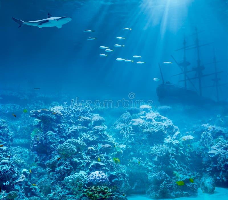 Sea or ocean underwater, shark and sunk treasures. Sea or ocean underwater with shark and sunk treasures ship