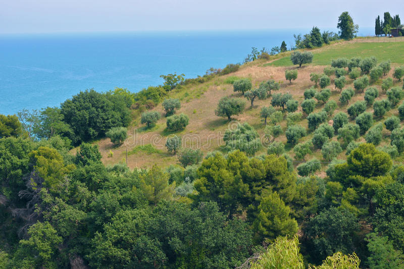 Download Sea and Olive trees stock image. Image of trees, farm - 20624409