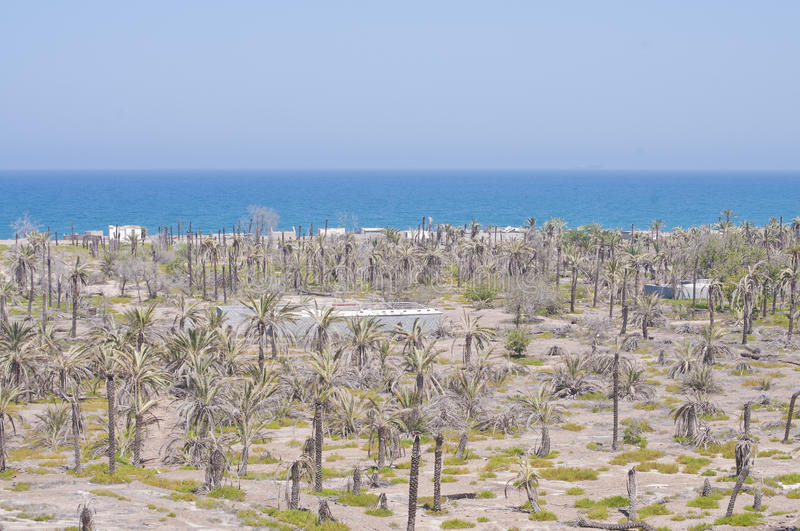 Sea and Palm Trees on Desert