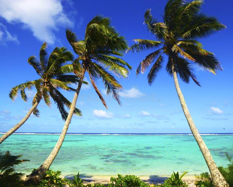 Sea with palm trees over tropical water at Muri lagoon, Rarotonga, Cook Islands. stock image
