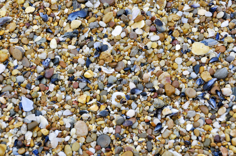Sea pebbles and cockleshells. Sea small pebbles and dead cockleshells abstract background royalty free stock image