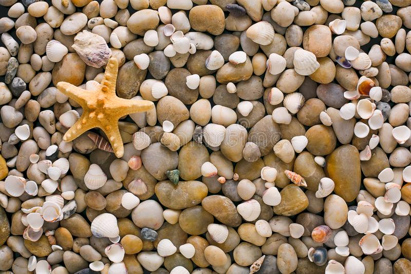 Sea pebbles and seashells background, natural seashore stones and starfish stock photo