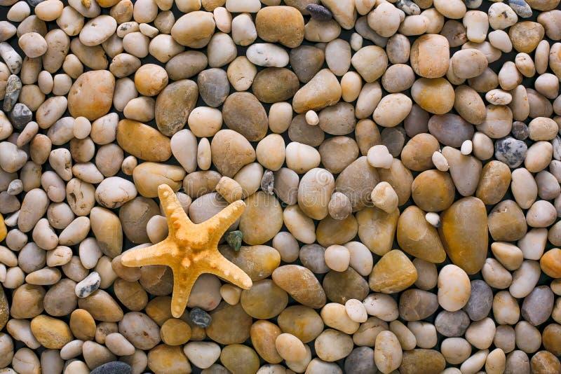 Sea pebbles and seashells background, natural seashore stones and starfish royalty free stock photos