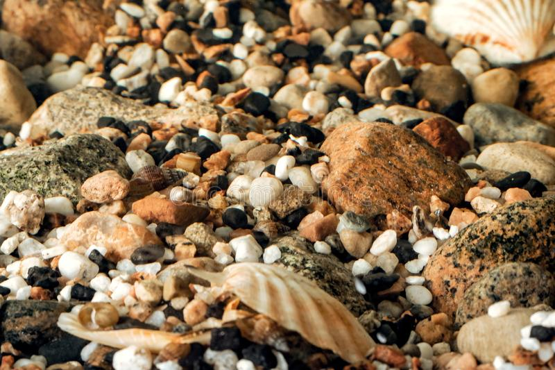 Sea pebbles and seashells in the water stock photography