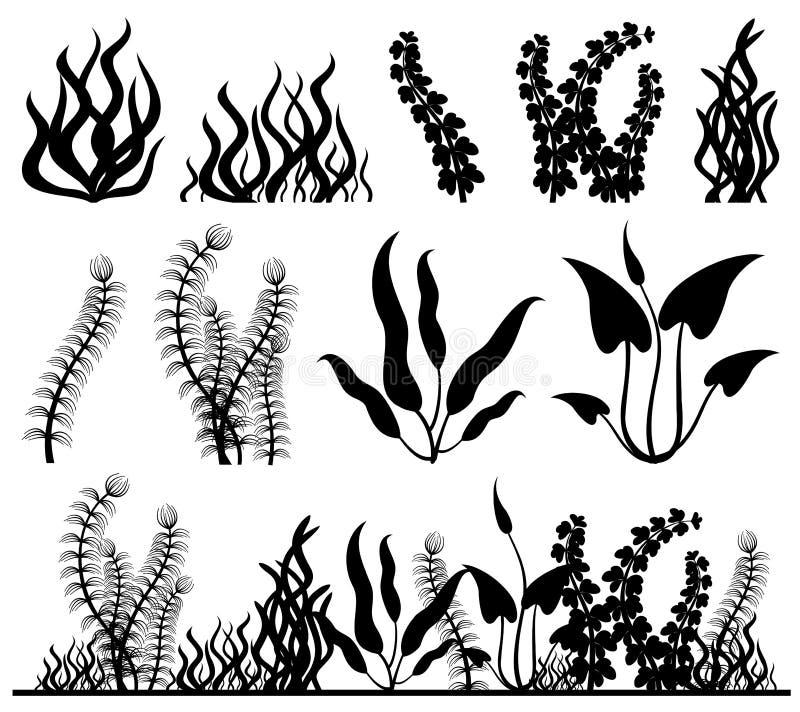 Sea plants and aquarium seaweed vector set. Nature seaweed black silhouette illustration royalty free illustration