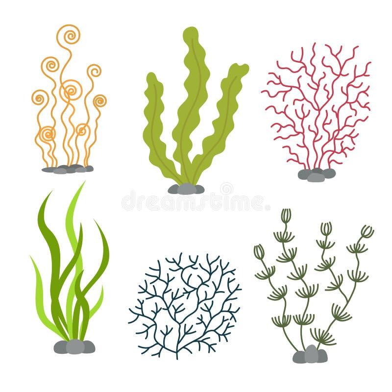 Sea plants and aquatic marine algae. Seaweed set vector illustration. On white stock illustration