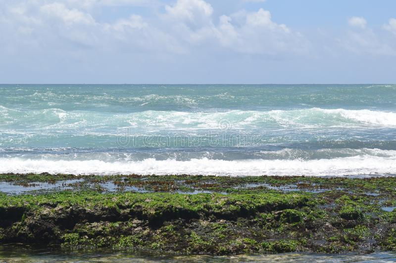 Sea Plants with pure blue water stock photography