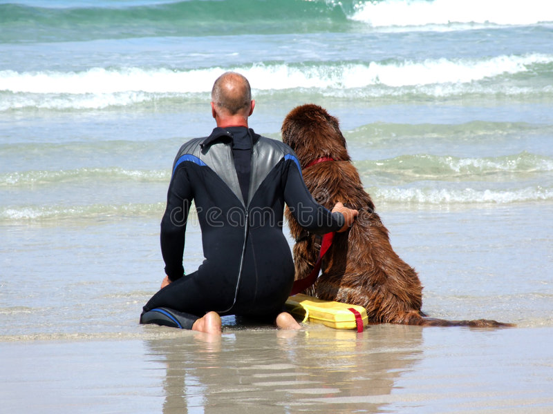 Sea Rescue Dog. The dog is being trained to rescue surfers in trouble