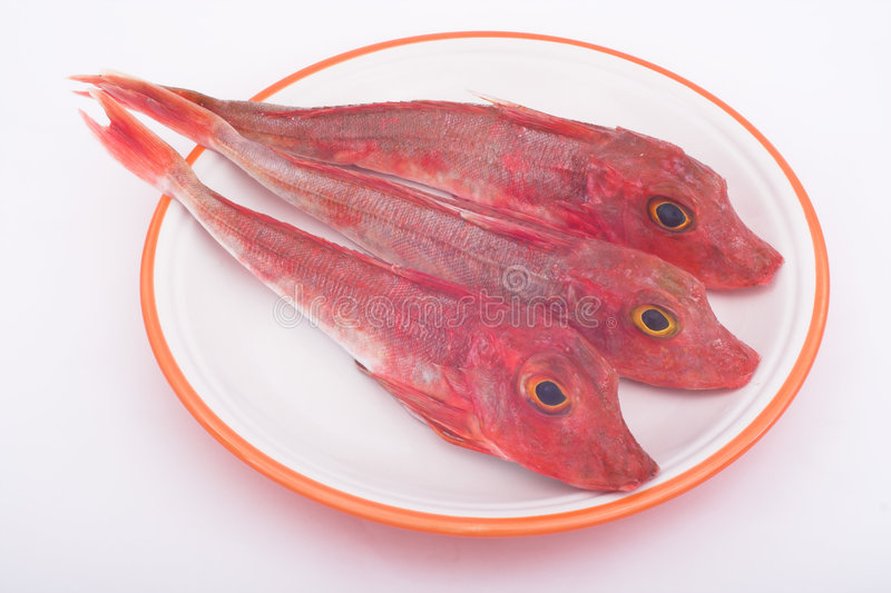 Download Sea robins stock photo. Image of proteins, grey, diet, cholesterol - 521592