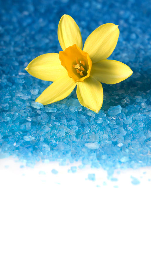 Sea salt for bath with with daffodil flower royalty free stock image
