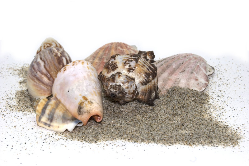 Download Sea sand shells stock image. Image of sand, collection - 7125533