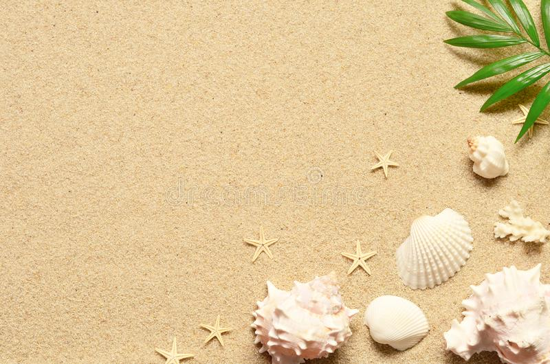 Sea sand with starfish and shells. Top view with copy space. stock image
