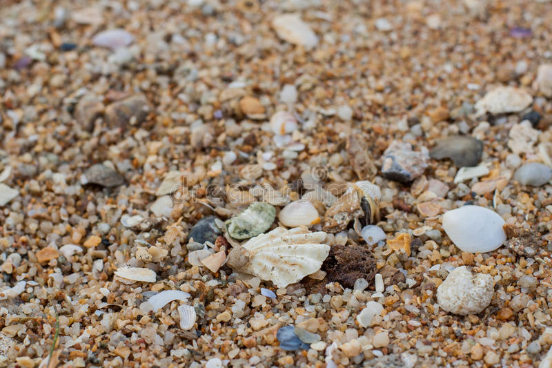 Sea sand texture made of shell and stone pieces. Seamless texture stock image