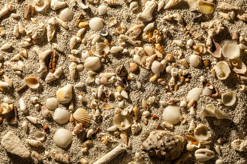 Sea sand with tropical shells stock photo