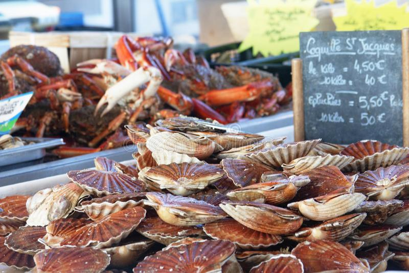 Sea scallops royalty free stock image