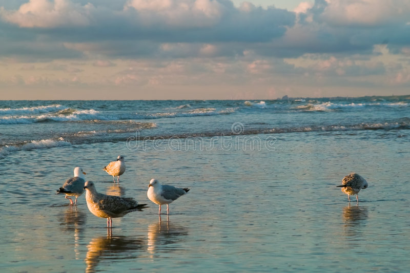 Download Sea and the seagulls stock image. Image of shore, fresh - 2833549