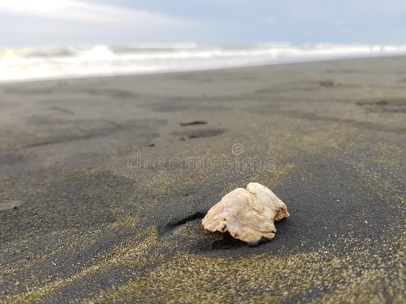 Sea, Seashell, Sand, Shore royalty free stock photos