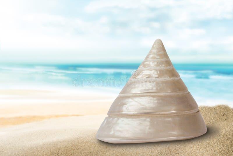 Sea, Seashell, Water, Vacation royalty free stock image