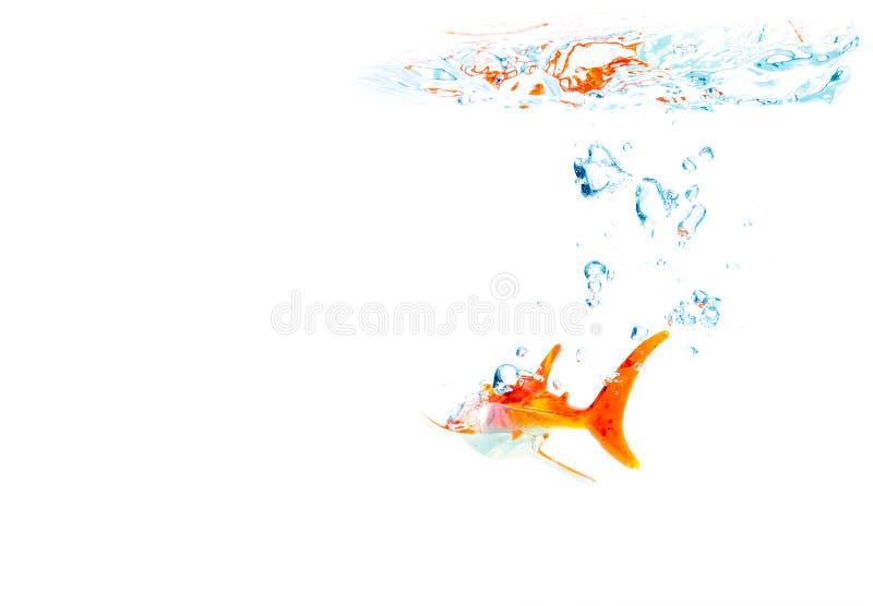 Download Sea shark stock photo. Image of animal, poisonous, talking - 39513144