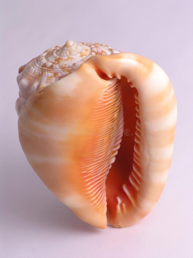 Free Sea Shell - 1 Stock Photos - 1715793