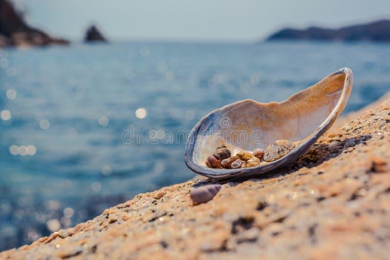 Sea shell on the sea. Sea shell on the sea royalty free stock photos