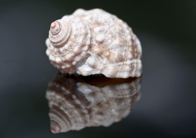 Sea Shell. Macro shot of a sea shell stock photos