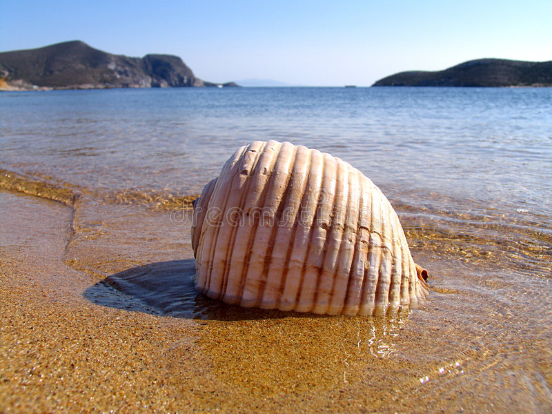 Sea shell, stock images