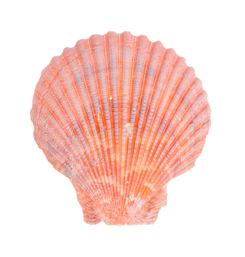 Download Sea shell stock photo. Image of color, animal, nobody - 14895928