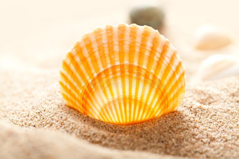 Sea shell. Orange sea shell on sand stock photos