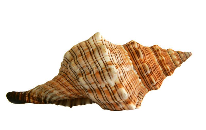 Download Sea shell stock image. Image of beach, water, shell, marine - 18641439