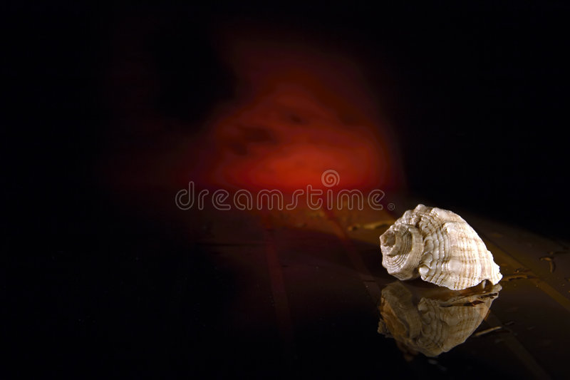 Sea Shell. White sea shell on black reflective surface with red glowing sky and sea in background royalty free stock photography