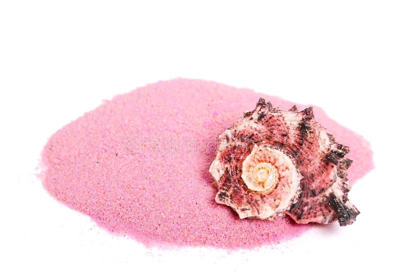 Download Sea shell stock image. Image of still, aquatic, sand - 24841711