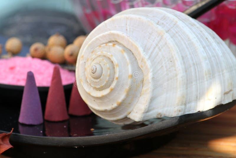 Download Sea shell stock photo. Image of life, items, shape, marine - 28138812