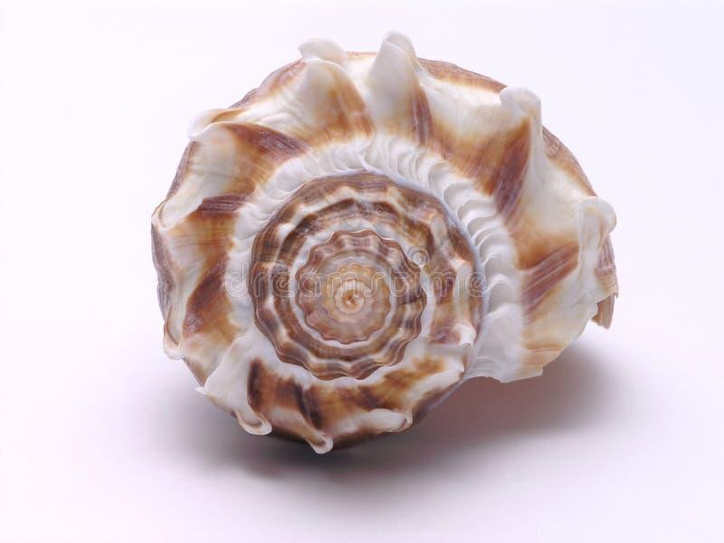Sea Shell - 3. Sea Shell pattern close up stock image