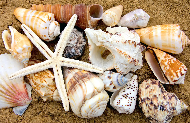 Download Sea shell stock photo. Image of sinks, summer, south, beach - 3370636