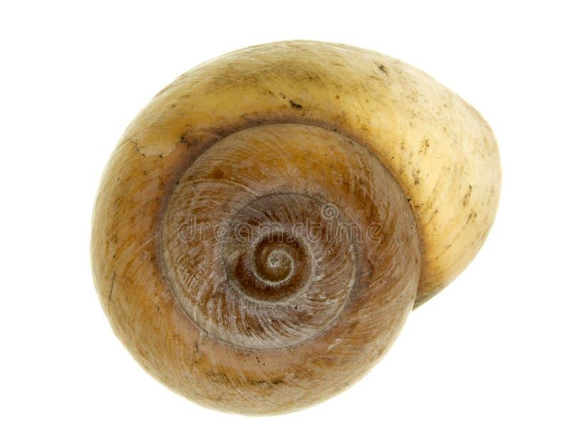 Sea shell. Of a snail royalty free stock photos