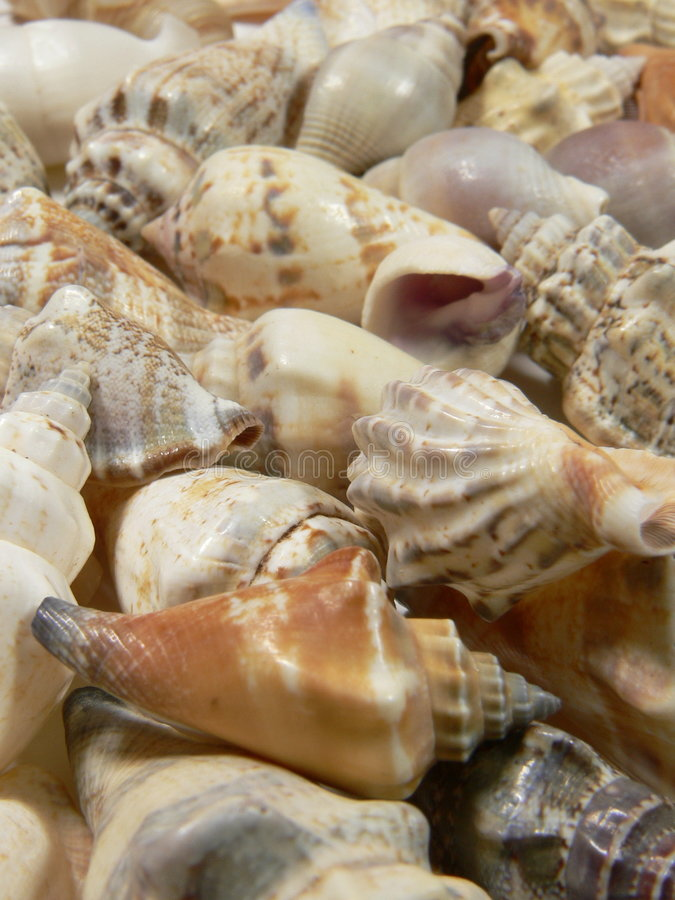 Download Sea Shell Stock Photography - Image: 517092