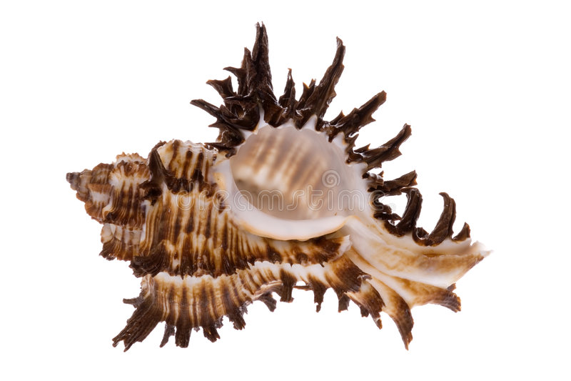 Sea Shell. Isolated macro image of a sea shell stock photos