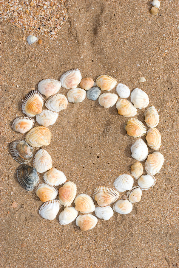 Sea shell. Texture series: sea shell circle shaped background stock image