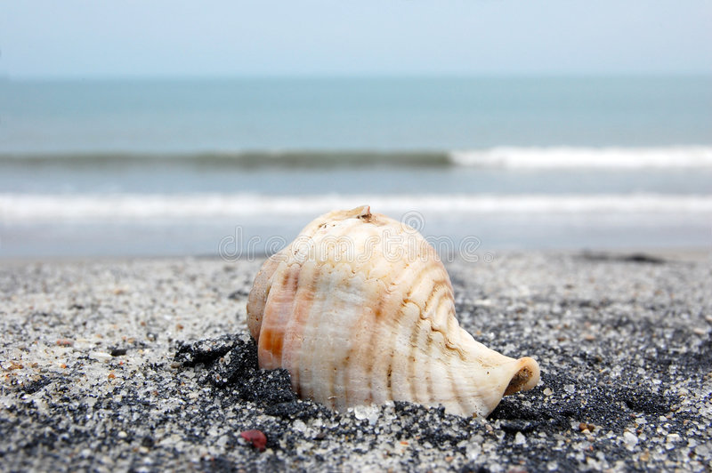 Download Sea shell stock image. Image of marine, wave, vacation - 5995003
