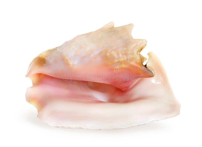 Sea shell. Beautiful sea shell from ocean royalty free stock photography