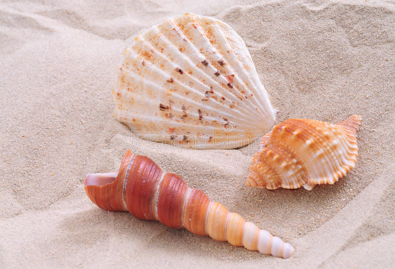Sea shell. On bright white sand stock images