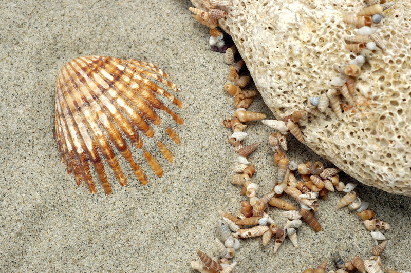 Sea Shell arrangement royalty free stock photo