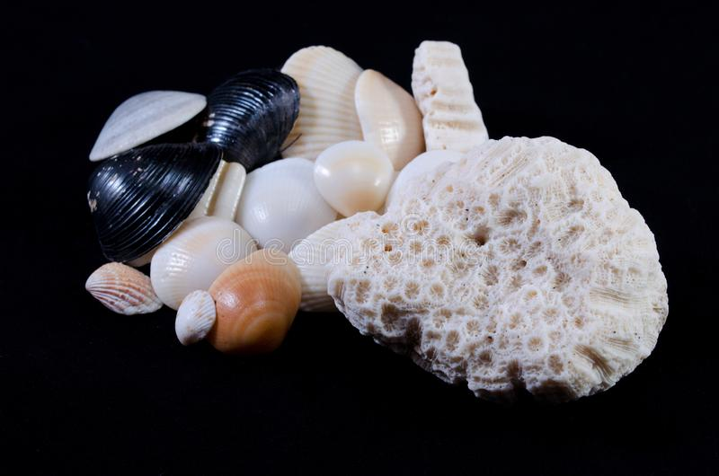 Sea shell arrangement black background royalty free stock photos