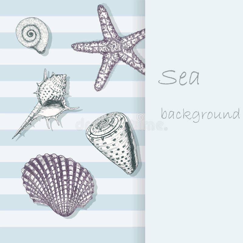 Sea shell background 4 vector illustration